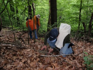 Volunteers search under cover for hiding herps.