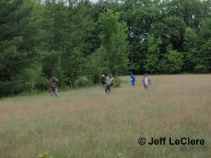Volunteers search a field for active herps.